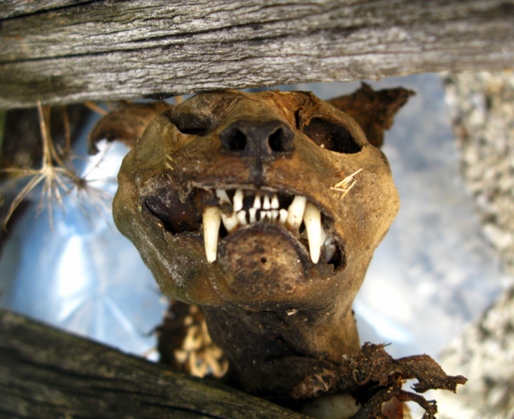 The Craziest Stuff Found in Homes - Image 5